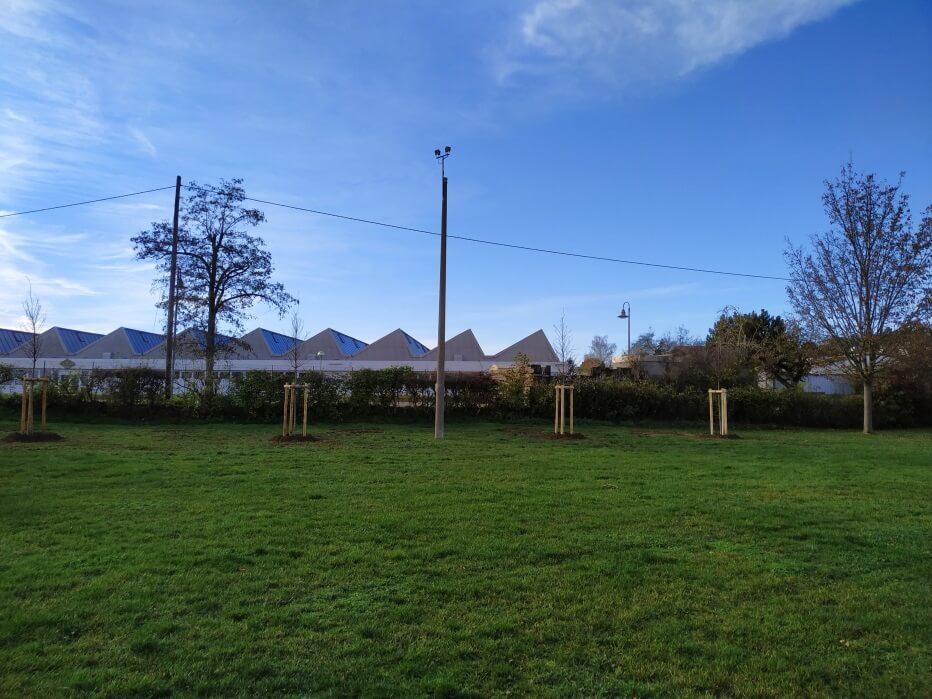 Neue Bäume für den Vereinsgarten